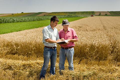 Organizacja i nadzorowanie produkcji rolniczej